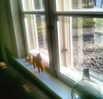 Försök igen! Här finns bra saker att läsa om innanfönster!