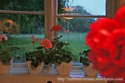köksfönster - juni, regn på rutan