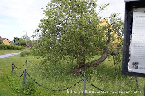 Säfstaholm-trädet