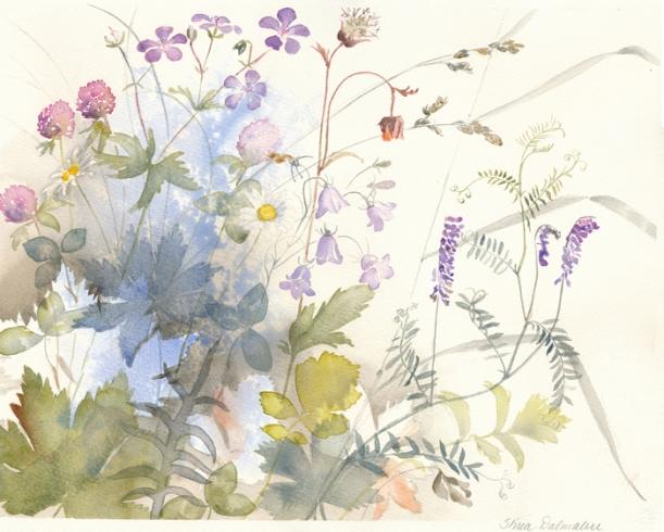 Ängens blommor_Akvarell av_www.StinaDalmalm