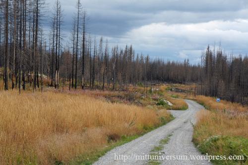 brända skogenA