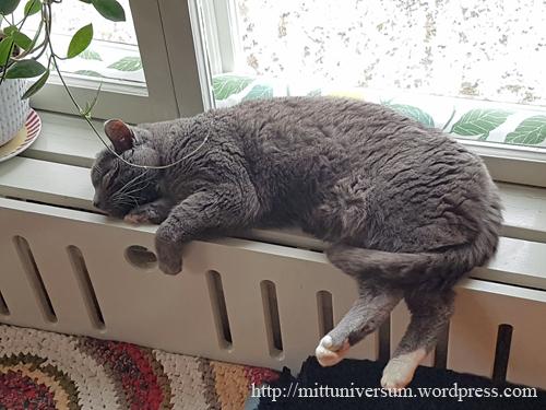 katt_varmt