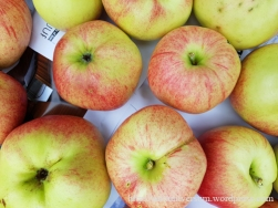 äpplen2017-5